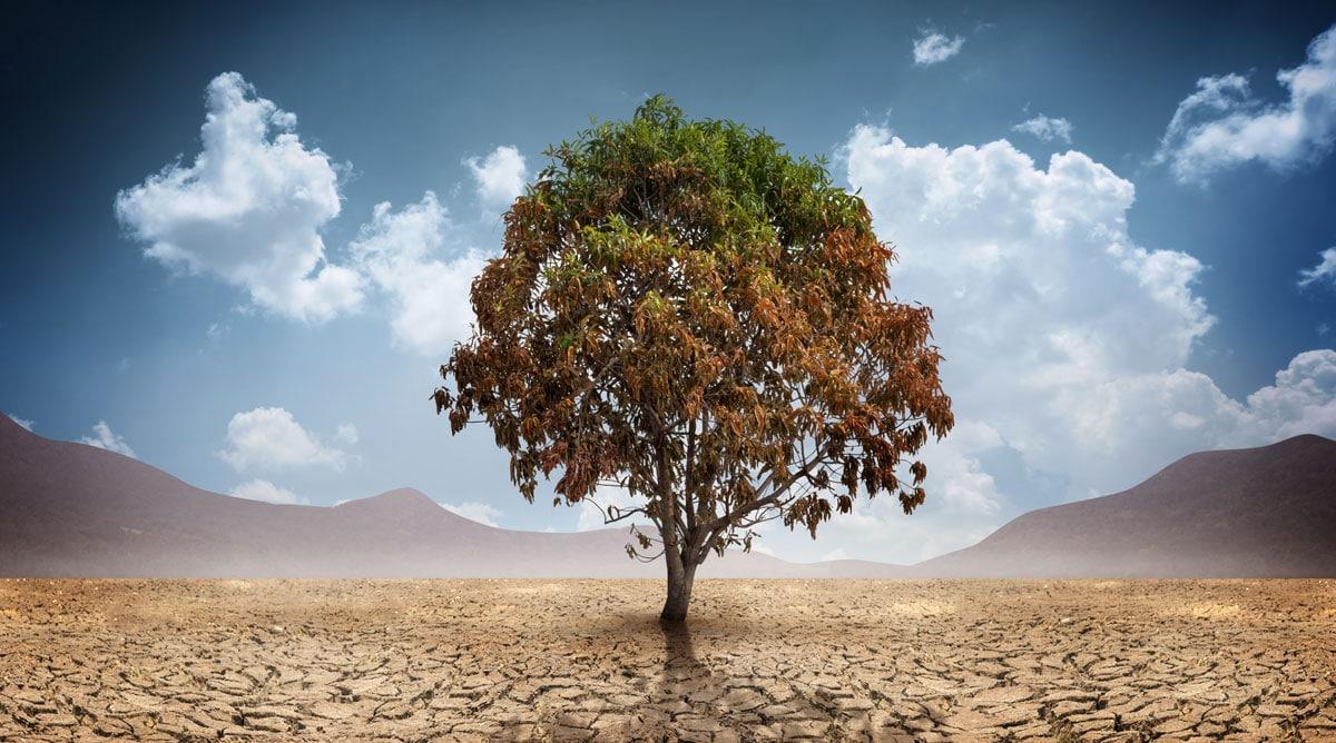 Wie übersteht ein Baum eine Trockenperiode?