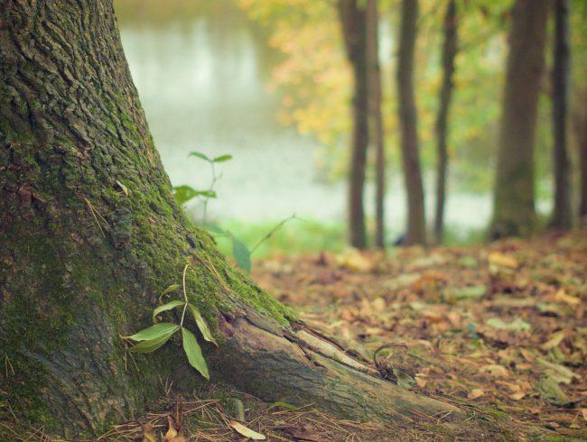 Anforderungen gesunder Stadtbäume an den Boden