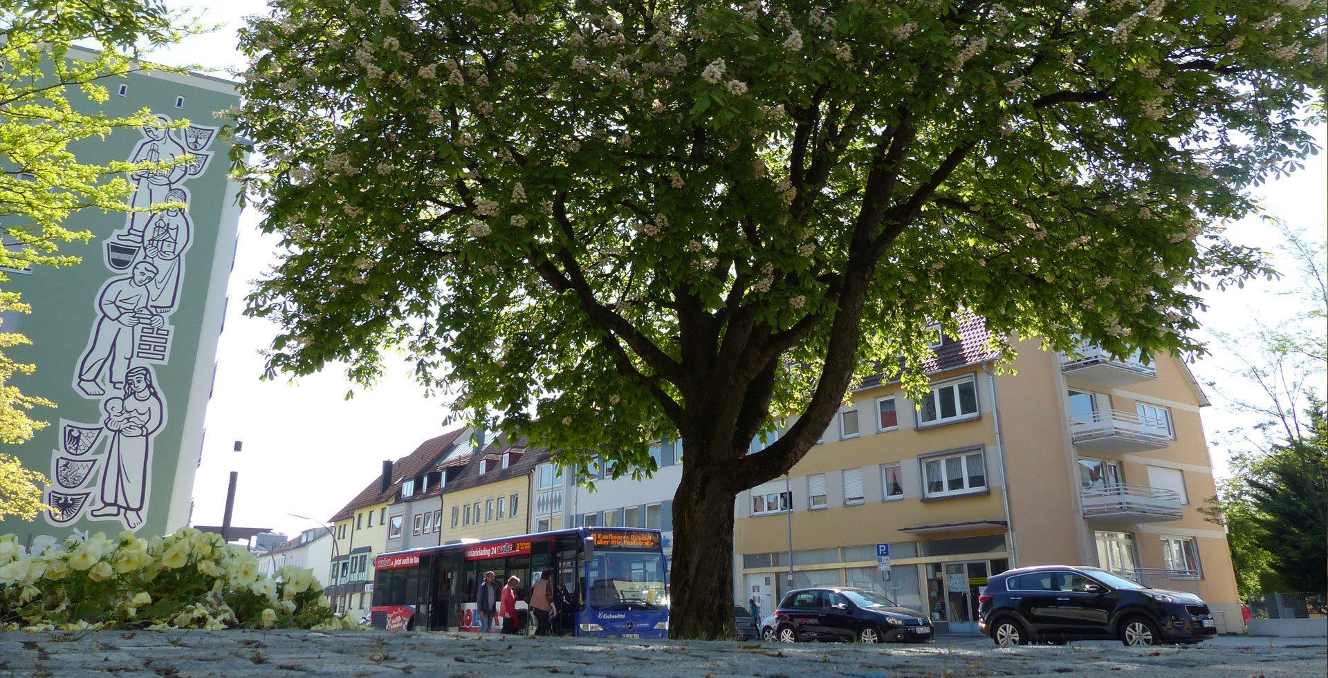 Die Vorteile von Stadtbäumen