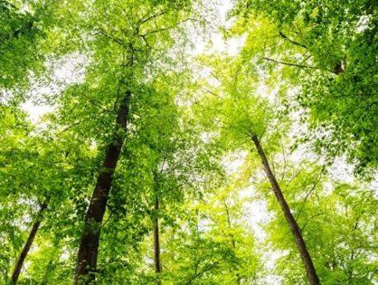 Bäume retten leben