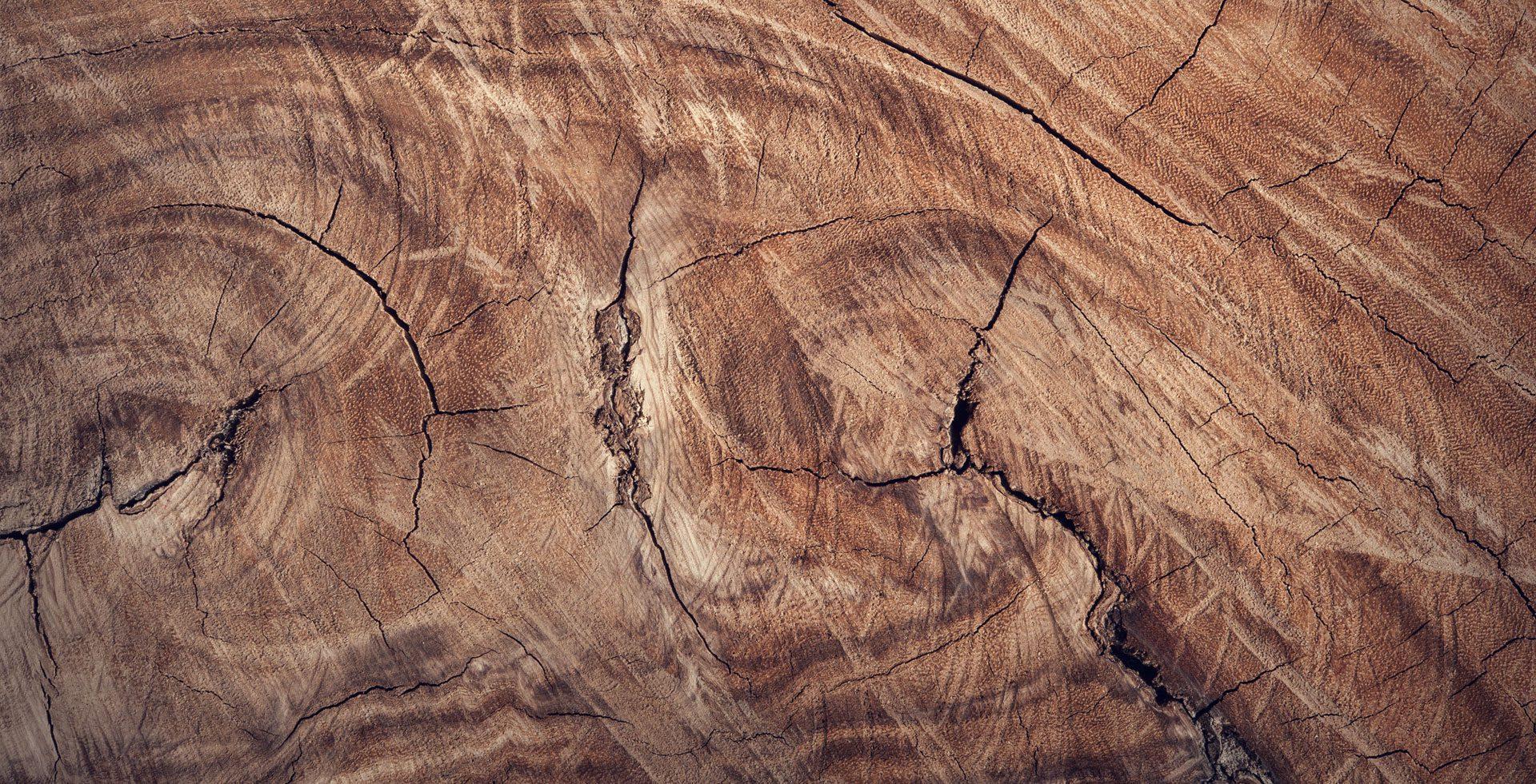 Holz als Baustoff