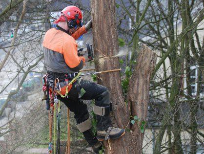 Videoempfehlung: Abgesägt - Stadtbäume in Not