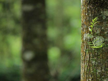 21.03. – Heute ist der Tag des Waldes!