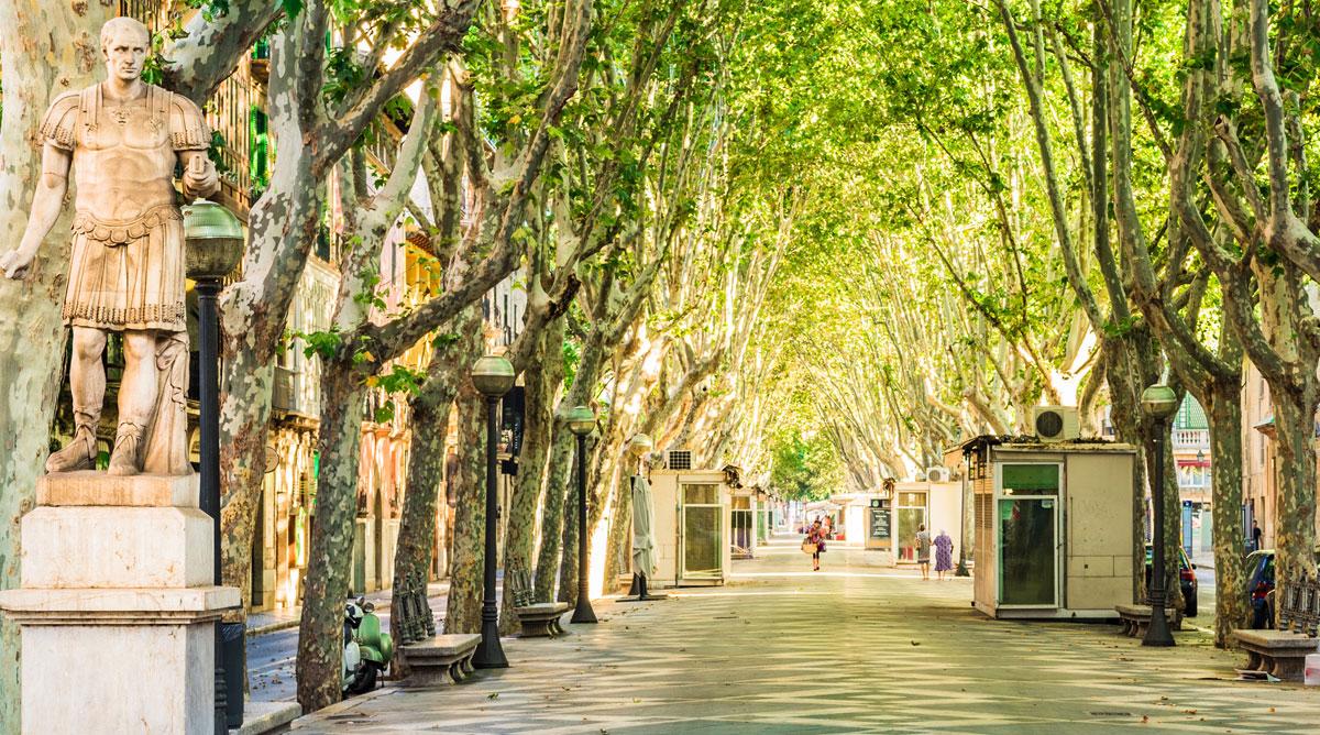 Wurzelbrücke bietet Bestandsbäumen Schutz