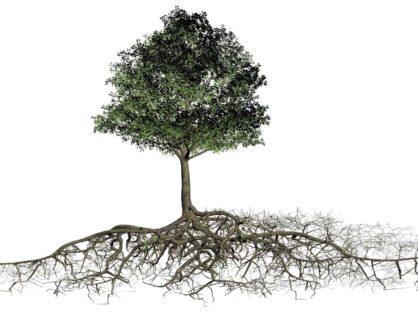 Querschnitt des Baums mit Wurzelraum