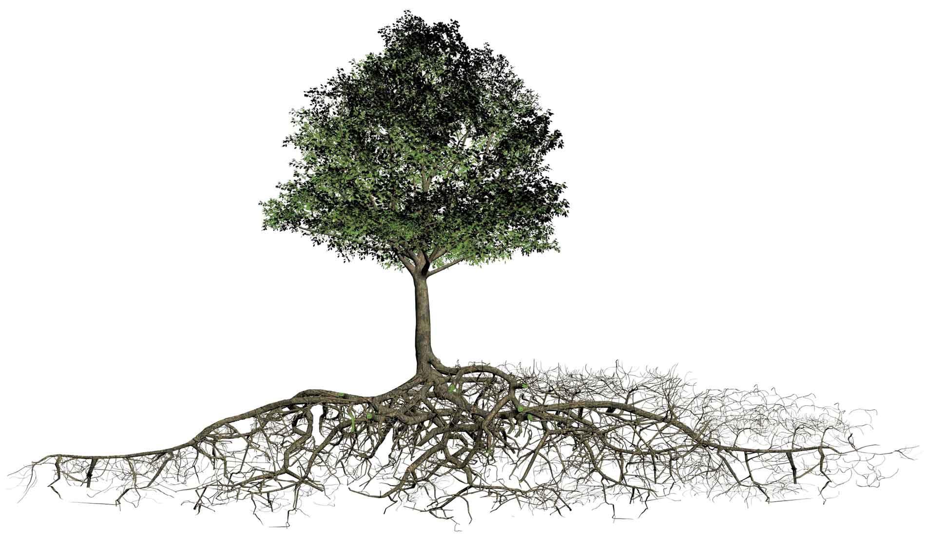 Benötigter Wurzelraum von Bäumen