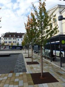 RootSpace Baumstandorte an der Bushaltestelle in Sigmaringen, Leopoldplatz