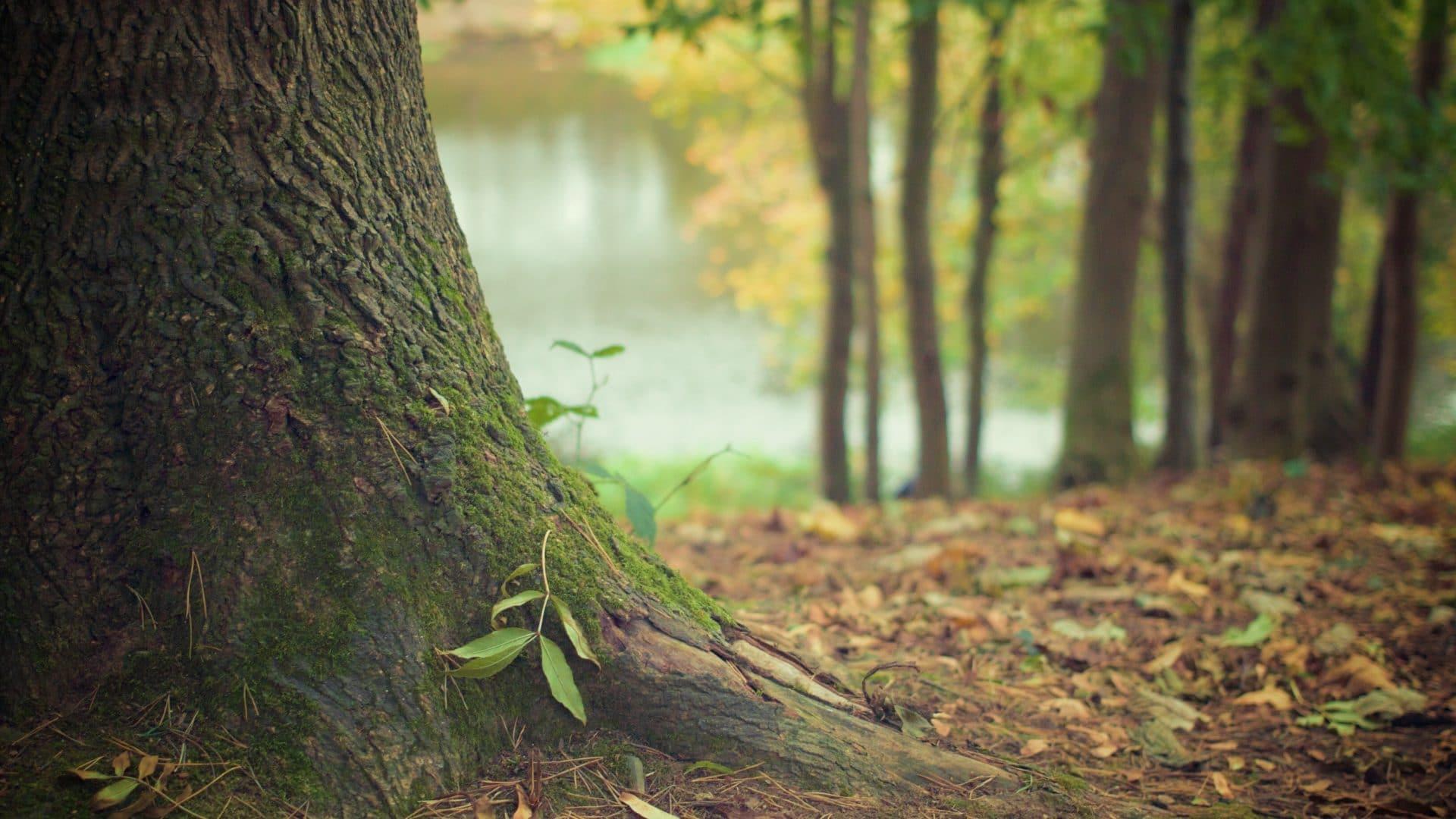 10 Fakten über Bäume