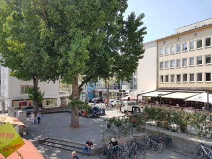 Der 6-Punkte-Plan für Baumpflanzungen in der Stadt