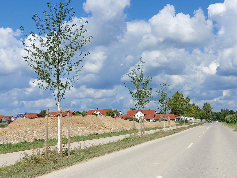 Schwabmünchen, Baumentwicklung ohne ArborSystem