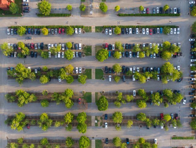 Der richtige Stadtbaum und wie man ihn findet