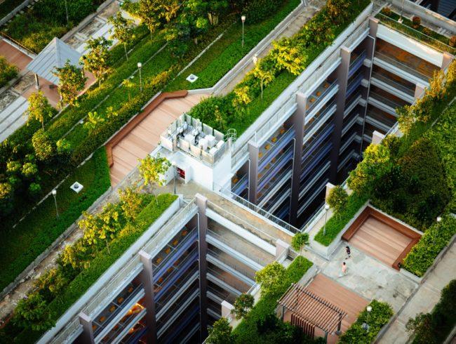 Bäume und Pflanzen auf Dächern