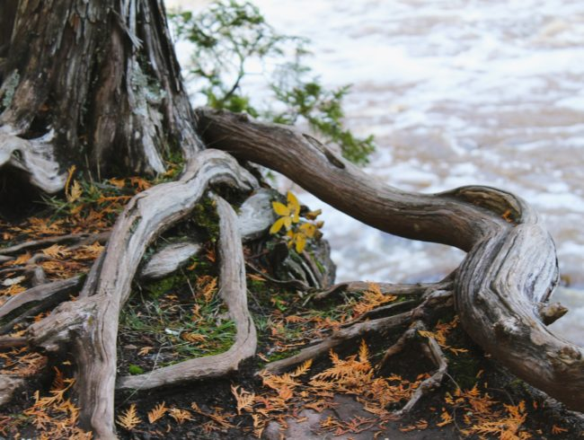 Mythen entlarven – Bäume & Leitungen