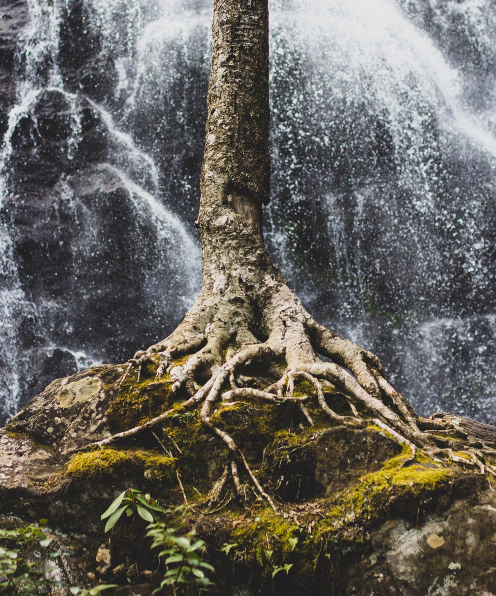 Baum mit Wurzeln