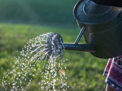 Baumbewässerung – Methoden, Vor- und Nachteile