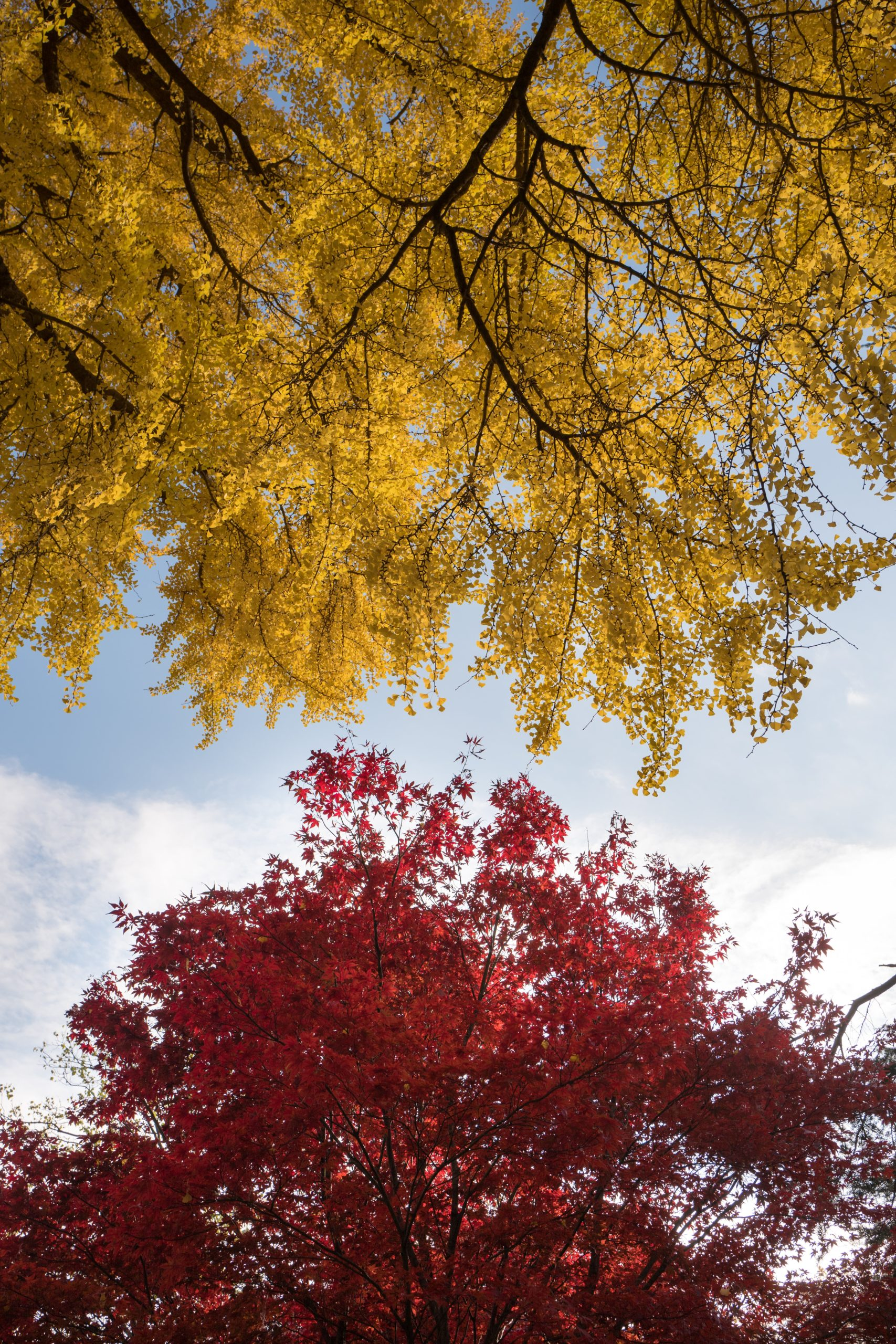 Zwei bunte Herbstbäume