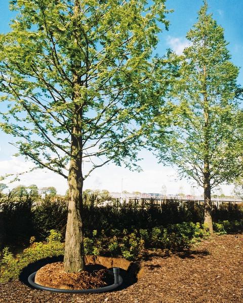 RootRain Baumbewässerung Schema