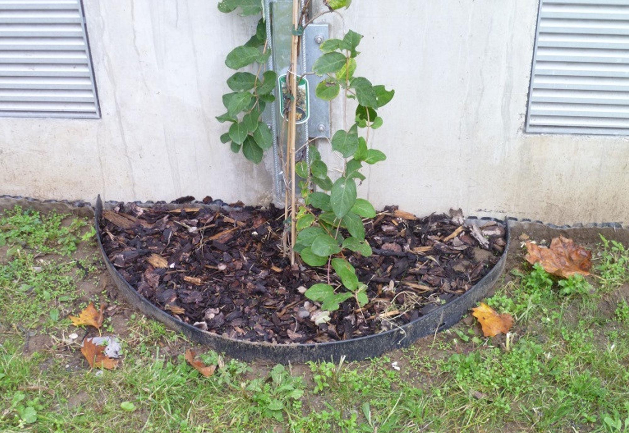Bewässerung mithilfe Gießrand aus Kunststoff